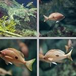 Misc Saltwater Fish photographs