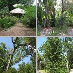 Misc Trees photographs