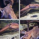 Molluscs photographs