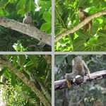 Monkeys photographs
