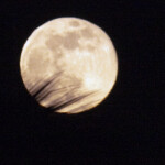 Moon and Palm Frond