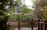 Morikami Japanese Gardens Photo Taken from Wooden Boardwalk