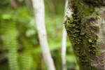 Moss Growing on Side of Tree
