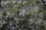 Moss Growing on Trunk of Tree Along Big Cypress Bend Boardwalk