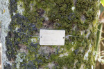 Moss on a Royal Palm with ID Tag