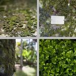 Moss photographs