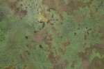 Mottled Green Concrete Floor