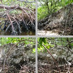 Mound Key Archeological State Park photographs