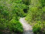 Mound Key State Park Path