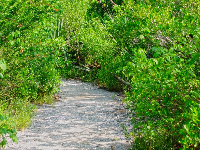 Mound Key Trail