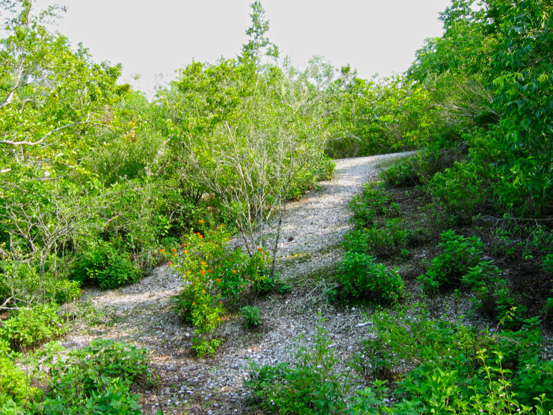 Mound Key Trail