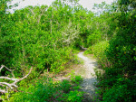 Mound Key Winding Path