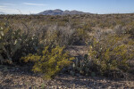 Mountains Beyond a Vast Landscape of Desert Shrubs