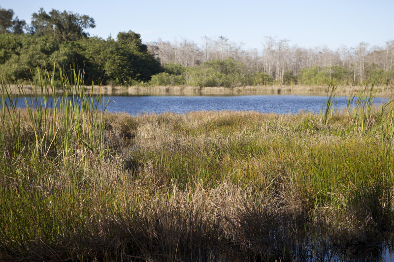 Moving Water and Grass at the Big Cypress National Preserve