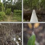 Mrazek Pond photographs
