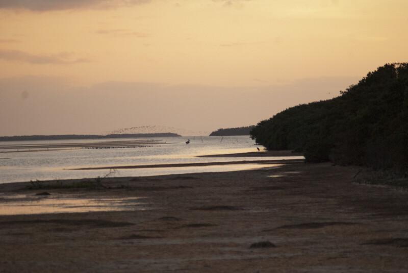 Muddy Shoreline
