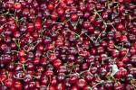 Multi-Colored Cherries