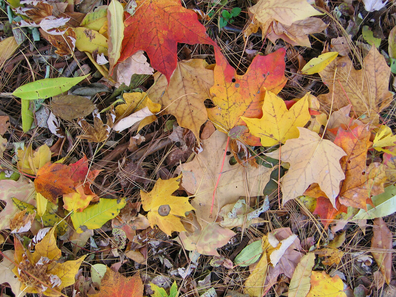 Multi-Colored Leaves and Twigs