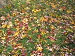 Multi-Colored Leaves on Grass