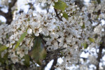 Multiple White Flowers