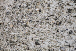 Multitude of Shells at Biscayne National Park