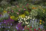 Munich-Nymphenburg Botanical Garden Shrubs