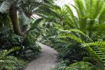 Munich-Nymphenburg Botanical Garden Walkway