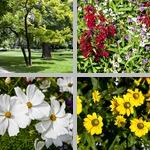 Munich Old Botanical Garden photographs