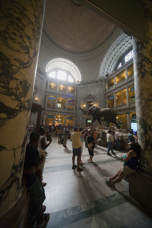 Museum of Natural History Atrium and Elephant