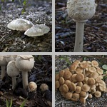 Mushrooms photographs
