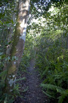 Narrow Path Surrounded by Ferns and Trees at Tree Snail Hammock of Big Cypress National Preserve