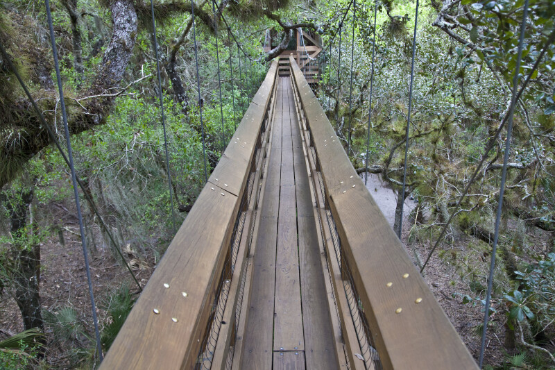 Narrow Skywalk at Myakka River State Park