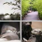 National Zoological Park photographs