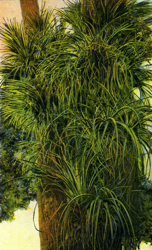 Natural Growth of Air Plants