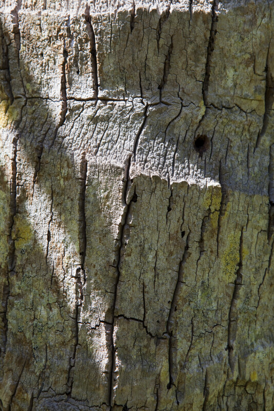 """Nawassi"" Coconut Palm Bark"