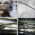 New England Aquarium photographs