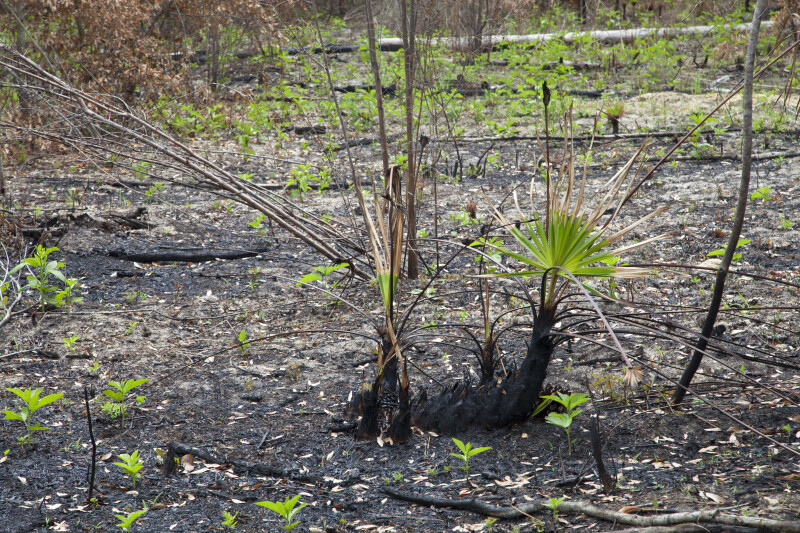 New Plant Growth in an Area Burned by Fire