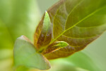 Newly Sprouted Leaves Close-Up