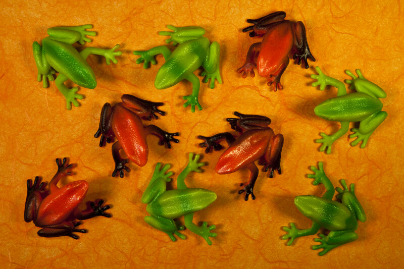 Nine Frogs