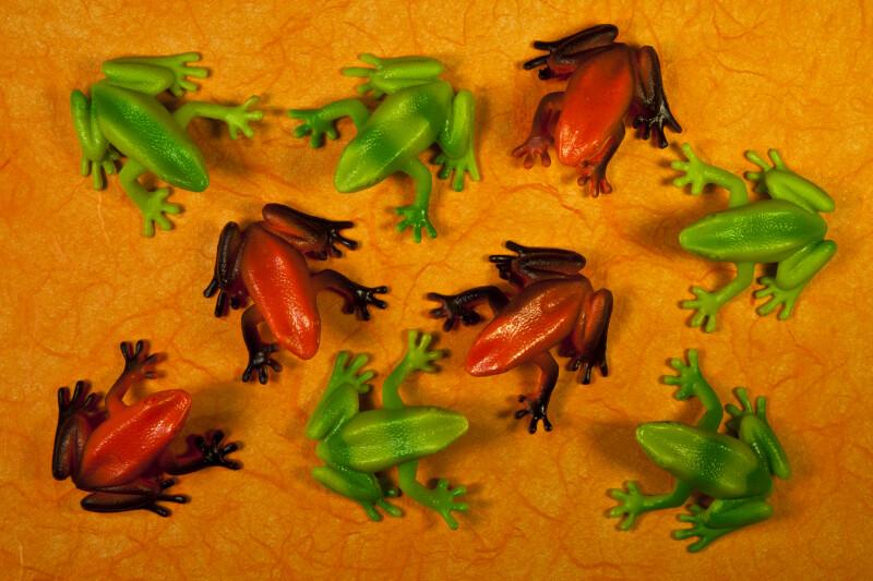 Nine Frogs