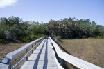 Nine Mile Pond Boardwalk