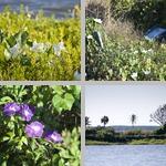 Nine Mile Pond photographs