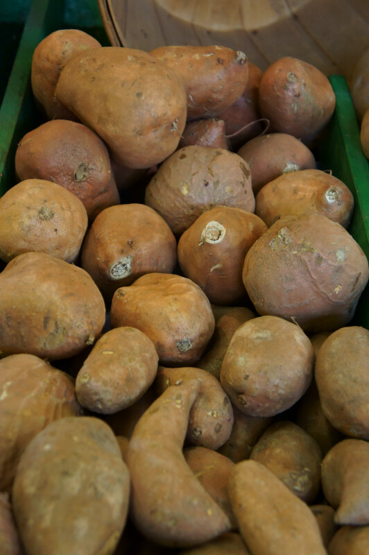 North Carolina Yams at the Tampa Bay Farmers Market