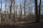Numerous Bare Trees at Boyce Park