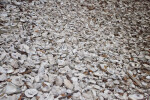 Numerous Shells
