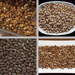 Nuts & Seeds photographs