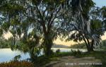 Oak Trees on the St. Johns River