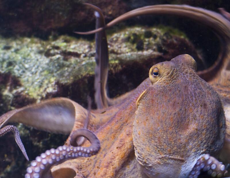 Octopus Close-Up