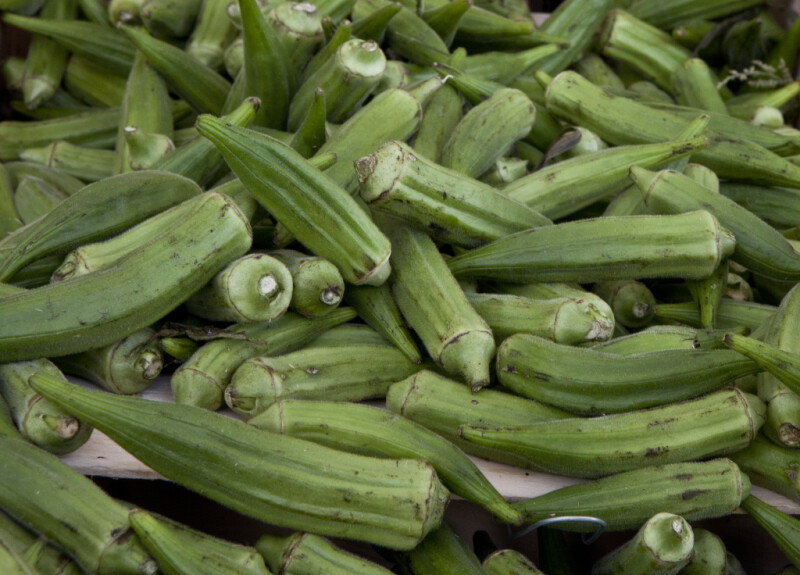 Okra on Display at Haymarket Square
