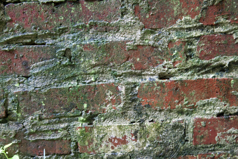Old Brick Wall at the Kanapaha Botanical Gardens